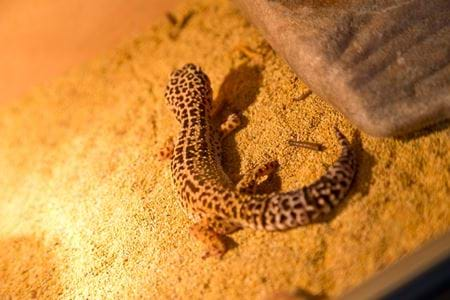 Reptiles, Bugs, Dinosaur and Farm Park Attraction