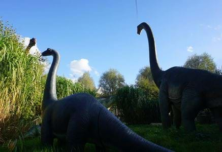 bing, dino and farm, special appearances